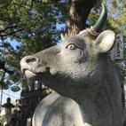 長草の牛2.jpg